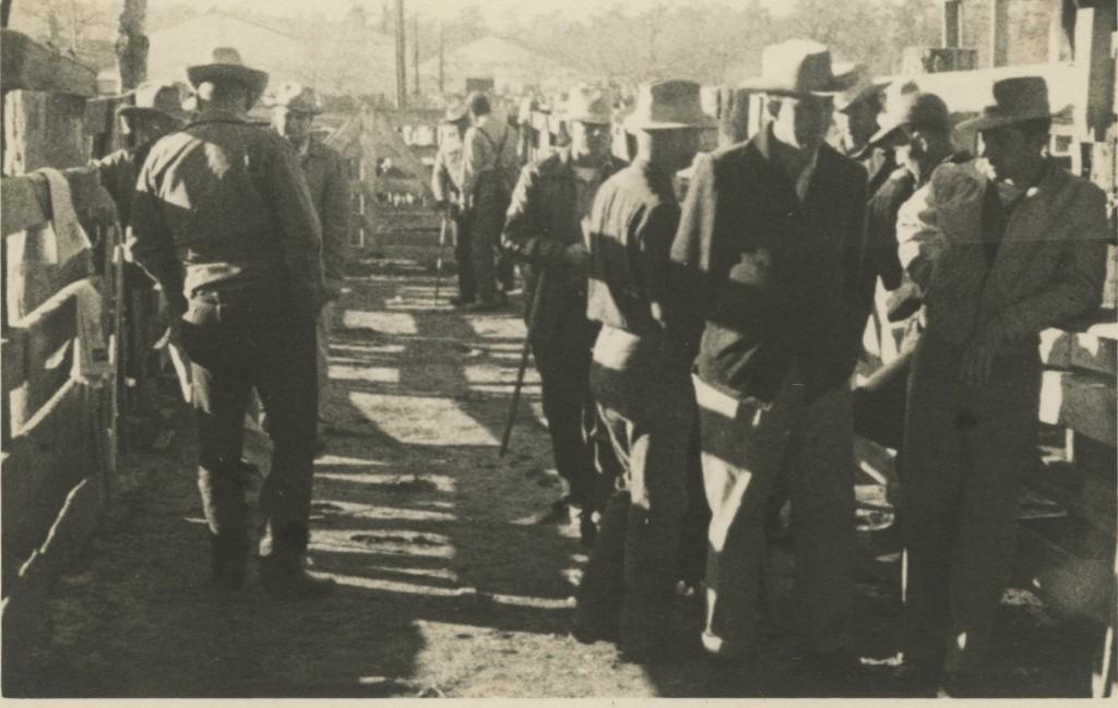 Port City Stockyard 1951